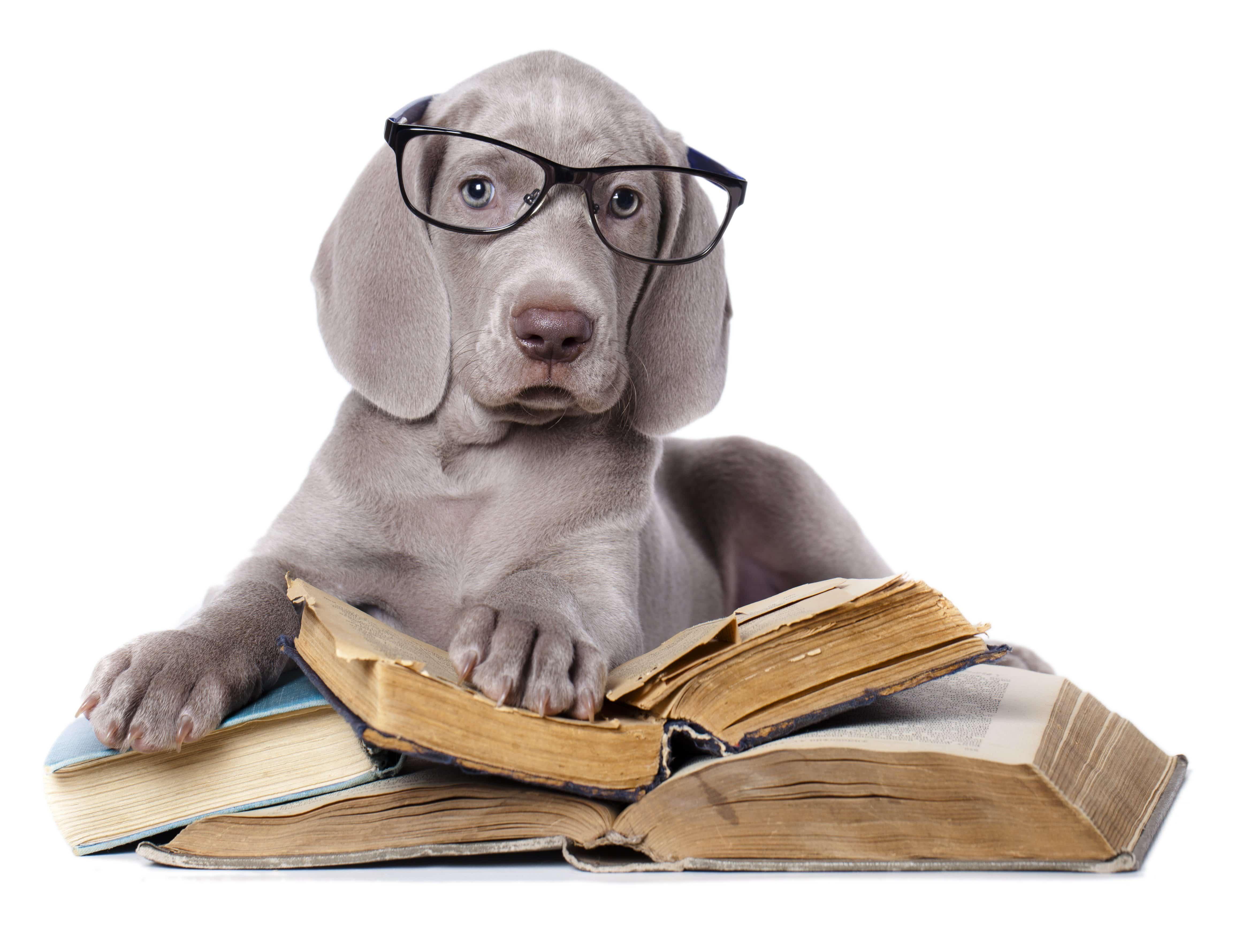 31062838 l - Come fare il riassunto perfetto di un libro, velocemente [Esempio]