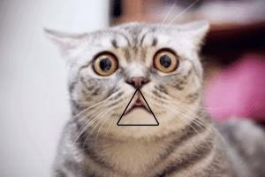 """Schermata 2018 11 06 alle 15.02.50 300x200 - Scoperto un """"triangolo"""" per stupire il professore all'esame, anche se hai studiato poco o niente."""