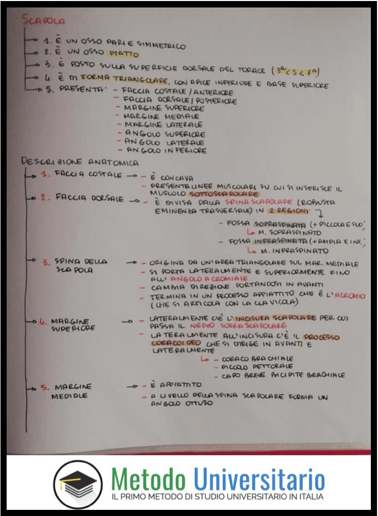 schema a cascata medicina anatomia - Schemi a Cascata di Medicina [Esempio di Anatomia]