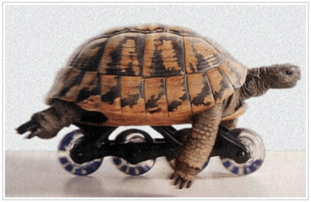 tartaruga buffa 1024x669 - Mappe Mentali: come usarle all'università.